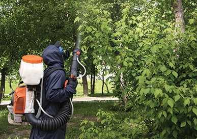 Изображение к статье На борьбу с вредителем деревьев На Иркутскинформ
